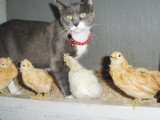 Female cat with chicks