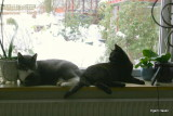 Mulle & Molly in the window