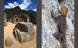 Intihuatana stone  |  Guarding lizard