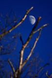 Focused on Moon