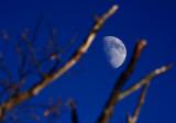 Focused on Moon II