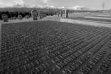 Names of fallen german soldiers