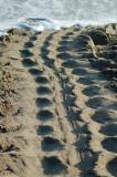 Leatherback Tracks