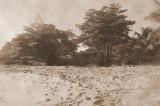 Photo I took of Mt. Plaisir 100 years ago