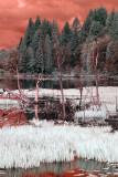 Pond near Willapa Bay, Washington.