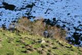 Cynorhodons d'automne