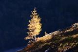Swiss Alps, Autumn 2007