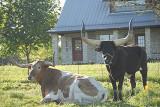Mason and Llano, Texas