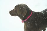 hannah in snow