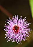 Horton's flower