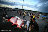 Fresh tuna catch in GenSan