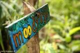 Moody Trail