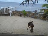 Deer at Lands Inn.jpg