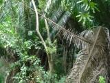 Hike Through Carambola (3).jpg