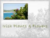 Irish Plants and Flowers