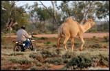 0166-camel