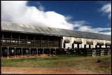 7026- kinchega historical woolshed near Menindee