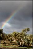 7039- kinchega rainbow