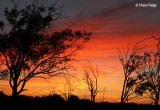 0051-kulcurna-sunrise.jpg