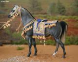 7313- Mon Nafa Rani in native Arabian costume