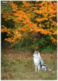 Rosie autumn pictures