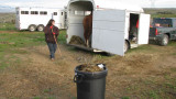 Haul it home loose in trailer