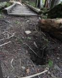 Hole in Packwood Lake trail