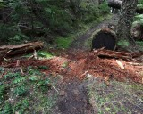 Rotted log cleared