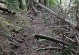 Limbs on Upper Lake Creek
