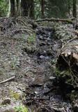 Creek Flowing on Upper Lake Creek Trail