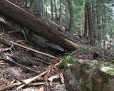 3' Windfall on Upper Lake Creek