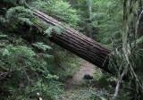 44 Windfall on Packwood Lake Trail