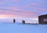 Horses in -22 degree sundown