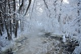 Formation of ice on trees V