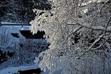 Sun on a snowy branch