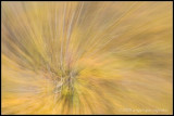 _MG_0304 autumn zt cwf.jpg