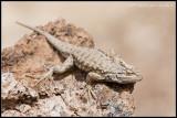 _MG_3631 lizard rock cwf.jpg