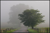 _ADR9604 foggy lane wf.jpg