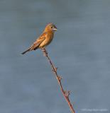 _MG_9057 bird cw.jpg