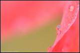 _MG_7238 petal c2wf.jpg