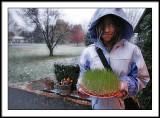 nov 15 grass grower