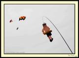 Kite_Festival1