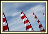 Kite_Festival2
