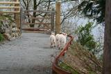 3 Lambs 2.JPG