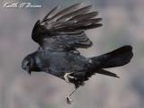 Carrion Crow 2