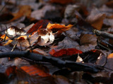 Herfstbladeren / Autumn leaves