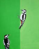 Great Spotted Woodpecker -Grote Bonte Specht