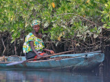 Woman harvesting oysters in the mangroves area near Lamin Lodge