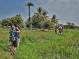 Rice fields near Abuko