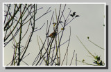 The morning bird